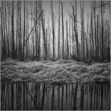 Premium poster Gloomy forest