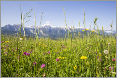 Wood print  Flower meadow in the mountains - Gerhard Wild