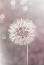 Canvas print  Dandelion in rose - Andrea Haase Foto