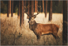 Premium poster Deer in the woods with grass