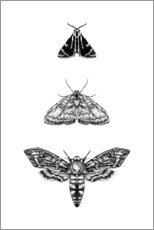 Canvas print  Moth - RNDMS