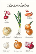 Acrylic print  Onion species - Typobox