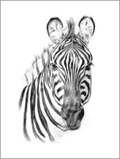 Canvas print  Zebra Sketch