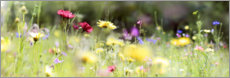 Aluminium print  Panorama of a wildflower meadow - Lichtspielart