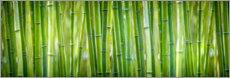 Wall sticker  Bamboo - Art Couture