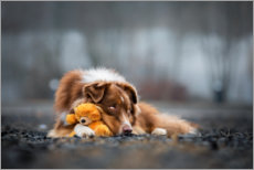 Premium poster Australian Shepherd with Teddy