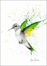 Canvas print  Hummingbird wings - Ashvin Harrison