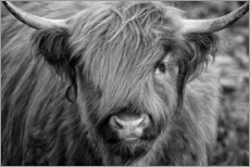 Premium poster  Highlander - Scottish Highland Cattle black and white - Martina Cross