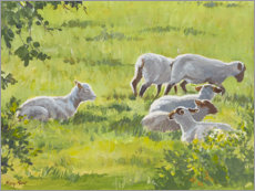 Premium poster Small flock of sheep in England