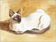 Canvas print  Siamese cat - Mary Want