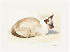 Foam board print  Resting kitten, watercolor - Mary Want