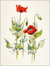 Aluminium print  Poppies watercolor - Mary Want