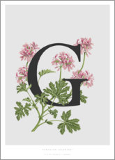 Premium poster G is for Geranium
