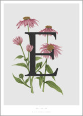 Aluminium print  E is for Echinacea - Charlotte Day
