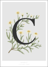 Wood  C is for Chamomile - Charlotte Day