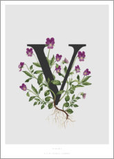 Aluminium print  V is for Violet - Charlotte Day