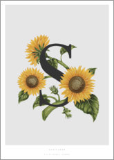 Aluminium print  S is for Sunflower - Charlotte Day