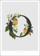 Premium poster O is for Orange Blossom