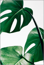Canvas print  Monstera - Art Couture