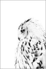 Acrylic glass  Snow owl - Art Couture