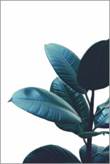 Poster  Rubber Plant Leaves - Art Couture
