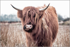 Premium poster  Brown highland cattle - Art Couture