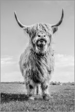 Canvas print  Scottish Highland Cattle - Art Couture
