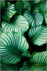 Acrylic print  Green foliage - Art Couture