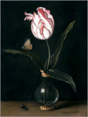 Canvas print  The 'summer beautiful' tulip - Balthasar van der Ast