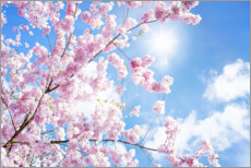 Canvas print  Pink cherry blossom in front of blue sky - Jan Christopher Becke