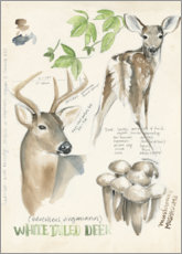 Premium poster Whitetailed deer & forest mushrooms