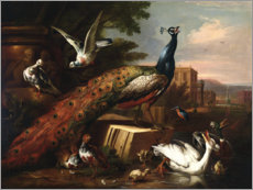 Acrylic print  A peacock surrounded by doves, hens and aquatic birds - Pieter Casteels III