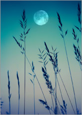 Premium poster  Full moon over the grasses