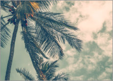 Acrylic print  Palm trees in summer