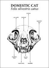 Premium poster Skull of the domestic cat
