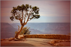 Canvas print  Tree over the Grand Canyon - fotoping