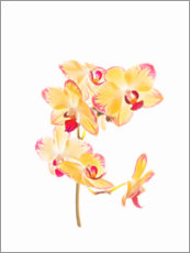 Wood print  Yellow orchid