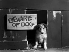 Aluminium print  Beware of dog