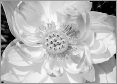 Wood print  Lotus flower in black and white