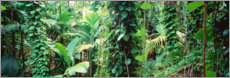 Acrylic print  Welcome to the jungle
