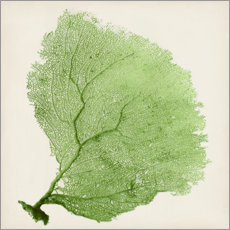 Premium poster Sea fan green