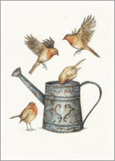 Aluminium print  Robins at the watering can - Mike Koubou