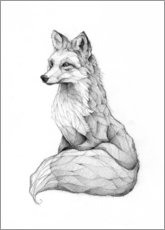 Forex  Vulpes vulpes, black and white - Mike Koubou
