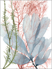 Wood print  Sea weeds I - Grace Popp