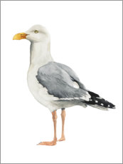 Wall sticker  Gull - Grace Popp