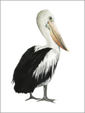 Wall sticker  Pelican - Grace Popp