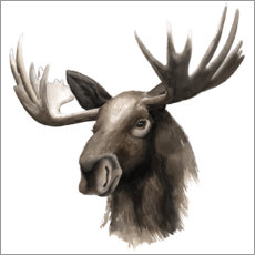 Canvas print  Moose portrait - Grace Popp