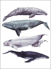 Wall sticker  Whales II - Grace Popp
