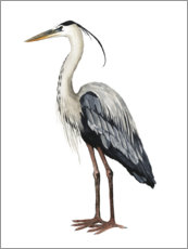 Aluminium print  Great Blue Heron - Grace Popp