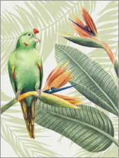 Canvas print  Amazon parrot - Grace Popp